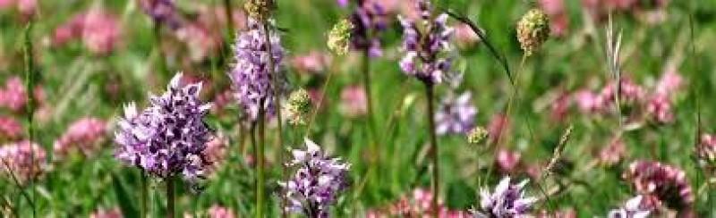 Locandina La Valle delle Orchidee