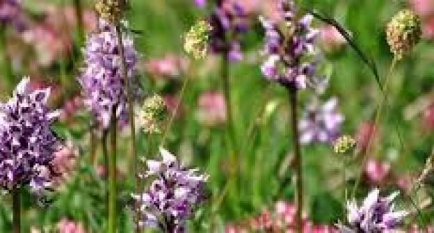 Visita La Valle delle Orchidee